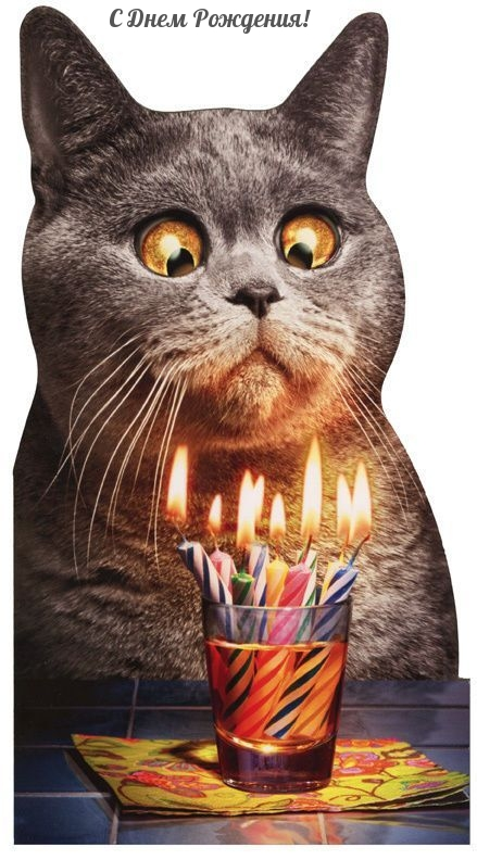 Оригинальная и угарная картинка с праздничным котом!