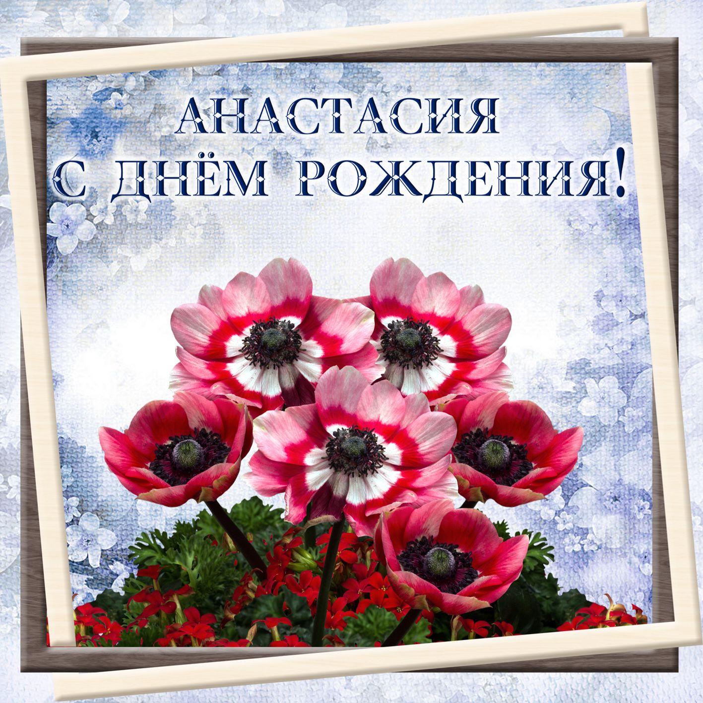 Картинка на ДР с цветами для Анастасии