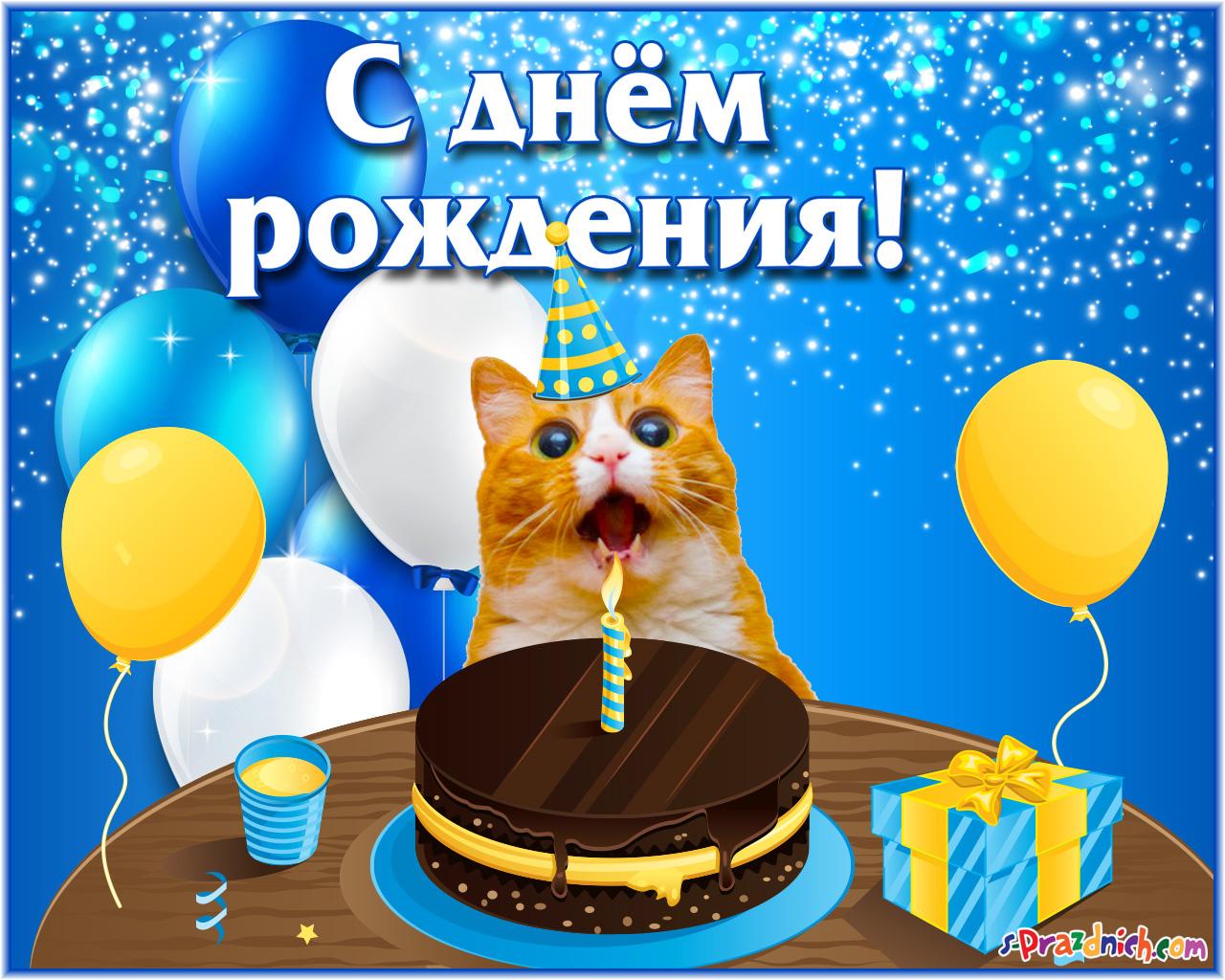 Поздравления с днем рождения с котами
